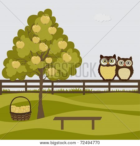 A Couple Of Owls In A Orchard With Apples