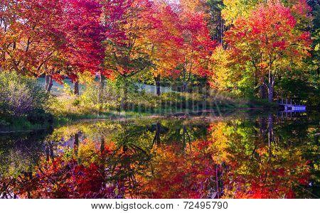 fall trees reflection