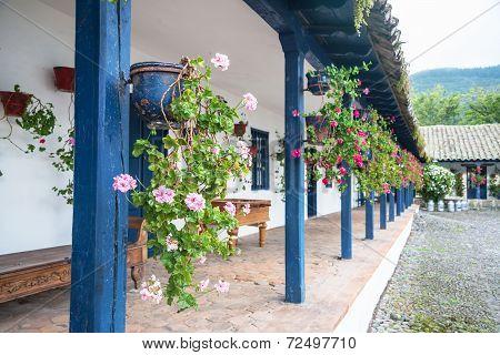Flowers in pots, in an old hacienda