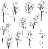 picture of winter trees  - set of different winter trees - JPG