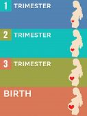 Постер, плакат: Pregnancy Stages Infographic