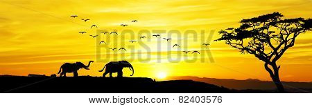 Panoramic of African wildlife