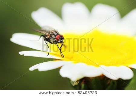 a fly on flower