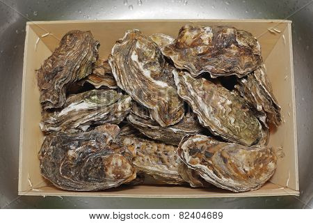 Oysters In Crate