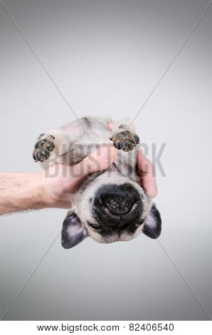 Dog Fell Asleep In The Hand