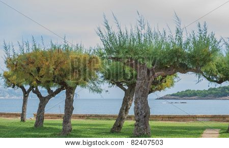 Trees By The Bay