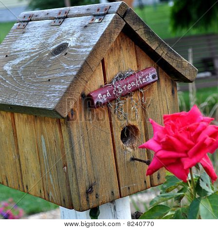 Bird house and Rose