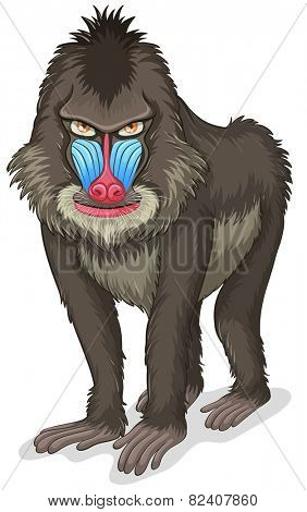 Illustration of a close up baboon
