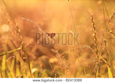 meadow at sunset with moth