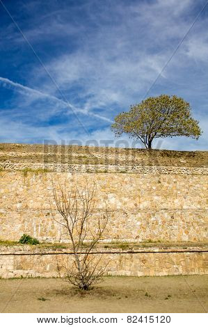 Monte Alban Oaxaca Small Tree And Bush On The Slopes Of Ancient Structure With Sky