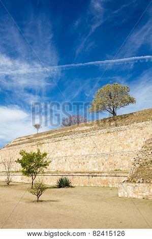 Monte Alban Oaxaca Small Tree And Bushes On The Slopes Of Ancient Structure And Sky