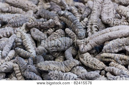 Asian Edible Insects