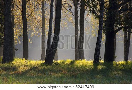 forest at moning at fall