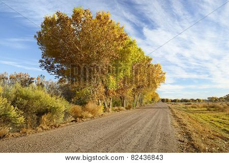 Colorful Autumn Trees Along Country Road