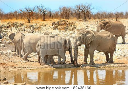 Elephants at watehole