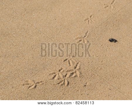 traces of birds