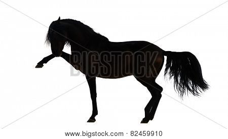 Silhouette of an Andalusian horse performing Spanish walk