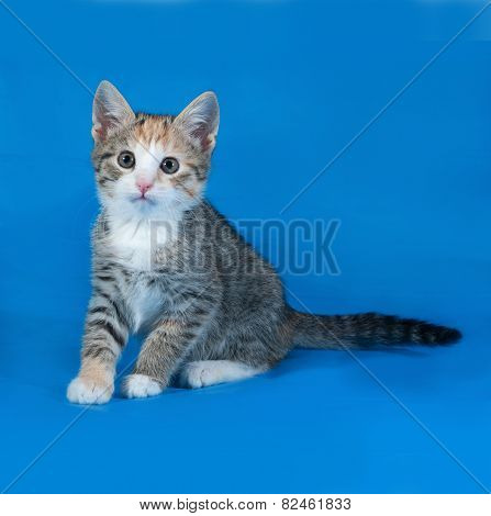 Tricolor Striped Kitten Sitting On Blue