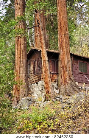 cabin with trees