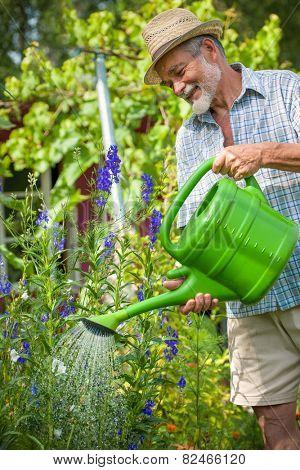 Senior man watering the flowers in  the garden