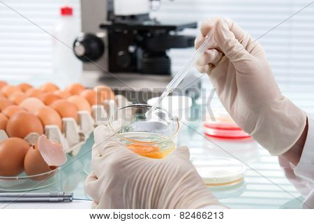 Quality control expert inspecting at chicken eggs in the laboratory