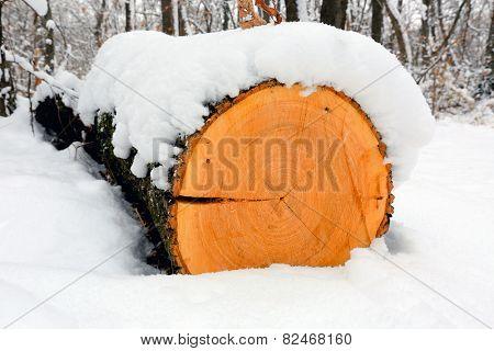 wooden log in winter forest under snow
