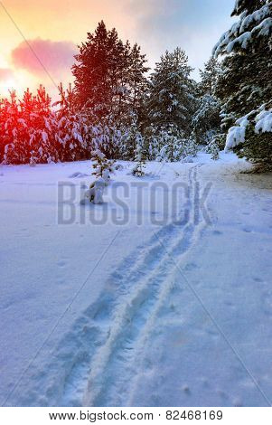 pathway in forest on sunset background