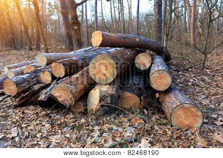 wooden logs in autumn forest