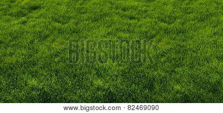 Green grass texture from a park