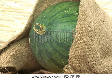 Watermelon partially pop out of old agriculture sack