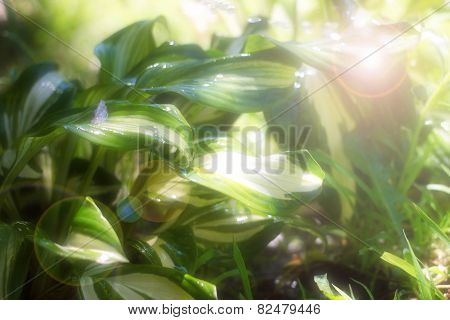 leaves are a grass