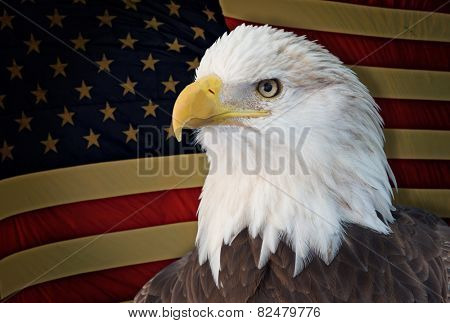 Bald eagle with grungy old american flag out of focus.