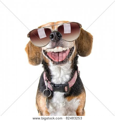 a cute beagle looking at the camera with sunglasses on and human like teeth or dentures showing in a smiling mouth