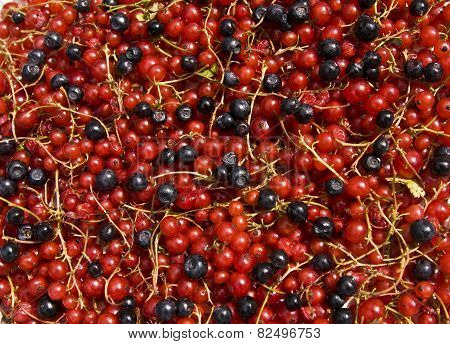 Redcurrant And Bilberry