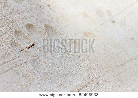 hand prints with wedding rings on tropical sand beach, outdoor beach wedding