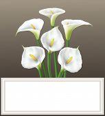 stock photo of calla  - Elegant  beautiful white Calla lilies on dark  paper for greeting card - JPG