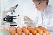 stock photo of inspection  - Quality control expert inspecting at chicken eggs in the laboratory - JPG