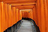 foto of inari  - Fushimi Inari Taisha Shrine in Kyoto - JPG