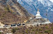 image of yaks  - Yak on the trail near Everest Base Camp in Nepal - JPG