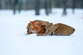 pic of blanket snow  - Cute red cat wrapped in blanket on snow background - JPG