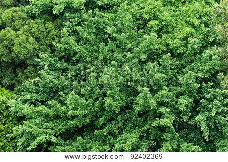 Green plant from top view