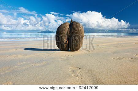Sea's coconuts (coco de mer) on beach at Seychelles, Mahe