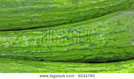Close View Small Seedless Cucumbers