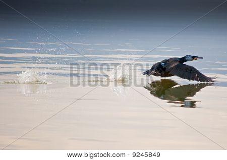 Bird lift off