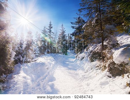 Snowy View In Tatra Mountains