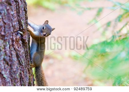 Chipmunk On A Tree