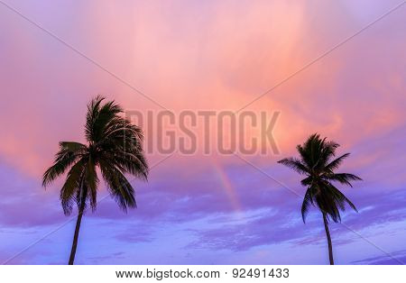 Palms, And Sunset In Central America