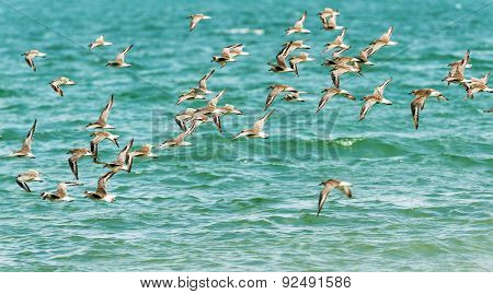 Birds Flying Over Water