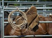 foto of bareback  - Rope and bareback gear on a fence on a sunny day waiting for the next event at the rodeo - JPG