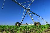 stock photo of sprinkler  - Crop Irrigation using the center pivot sprinkler system - JPG